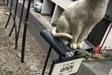 猫町ギャラリー