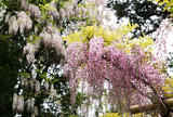 萬葉植物園