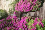 祇園山 安養院