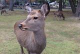 奈良国立公園