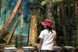 久慈琥珀(株) 久慈琥珀博物館