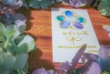 みずいろの花