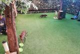 嵐山フクロウとヒョウ猫の森