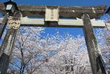 菊池神社参道