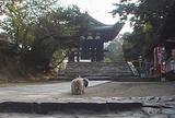 東大寺鐘楼(奈良太郎)