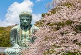 鎌倉 桜巡り