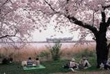 鳥屋野潟【桜の名所】
