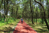 パークウェイ(阿波岐原森林公園)