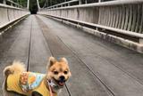 バンナ公園(石垣島)