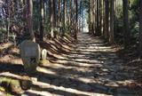腰巻地区箱根旧街道遺跡の石畳