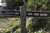 旧東海道(箱根旧街道) 下長坂(こわめし坂)