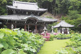 「源氏物語」八の宮が他界した山荘 三室戸寺