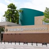 【円山動物園の楽しみ方完全ガイド】人気のエリアや動物は?見どころやグルメスポットを徹底解説