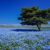 【茨城県 観光スポット紹介】海や山に恵まれた魅力いっぱいの観光スポット29選!