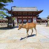 奈良旅行ガイド!人気エリアや見どころ・アクセス情報が満載!