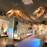 【国立科学博物館の楽しみ方完全ガイド】親子で学べる体験型ミュージアム!