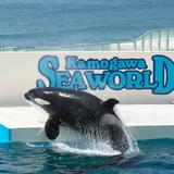 【鴨川シーワールドの楽しみ方完全ガイド】水族館の見どころやおすすめのショーなど魅力を大紹介