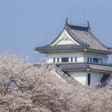 【宮崎観光】2020年3月はここをチェック!