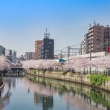 【神奈川観光】2020年3月はここをチェック!