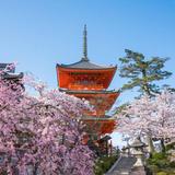 【京都観光】2020年4月はここをチェック!
