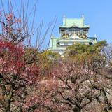 【大阪観光】2020年3月はここをチェック!