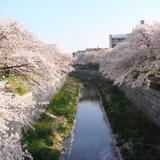 【名古屋観光】2020年4月はここをチェック!