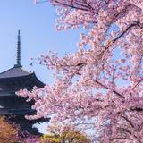 【京都観光】2020年3月はここをチェック!