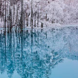 【北海道観光】2020年1月はここをチェック!
