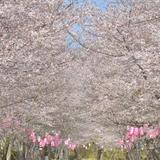 【鹿児島観光】2020年3月はここをチェック!