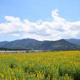 【鹿児島観光】2020年4月はここをチェック!