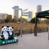 【上野動物園】ジャイアントパンダの観覧方法徹底ガイド