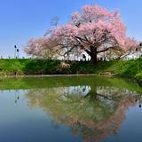 【福岡観光】2020年4月はここをチェック!