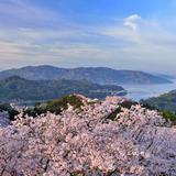 【愛媛観光】2020年4月はここをチェック!