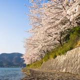 【滋賀観光】2020年4月はここをチェック!