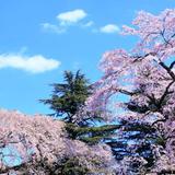 【宮城観光】2020年4月はここをチェック!