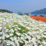 【香川観光】2020年5月はここをチェック!