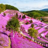 【北海道観光】2020年5月はここをチェック!