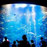 【京都水族館の楽しみ方完全ガイド】雨の日も楽しい!おすすめ情報や周辺グルメも満載!