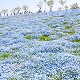 【大阪観光】2020年5月はここをチェック!