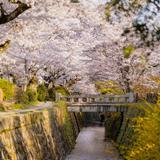 【2020年4月版】京都定番観光スポット紹介