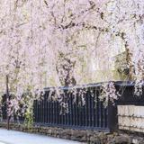 【2020年4月版】定番から穴場まで!秋田県観光スポット紹介