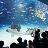 【2020年】サンシャイン水族館の楽しみ方完全ガイド!最新イベント情報も満載!