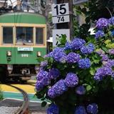 【鎌倉完全ガイド】鎌倉の観光でおすすめのスポットやグルメ・アクセス情報も満載!