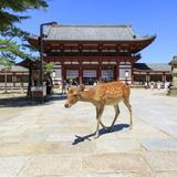 奈良県の新型コロナウイルス感染症対策と観光の最新情報(10月15日更新)
