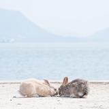 知ってると便利!うさぎの島、大久野島の観光Tips集