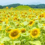 【2020年8月版】定番から穴場まで!宮崎観光スポット紹介