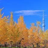 【東京観光】2020年11月はここをチェック!