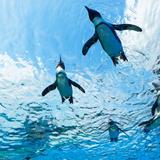 【2021年最新】東京で注目の水族館完全ガイド