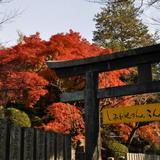 【香川観光】2020年11月はここをチェック!