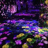 【最新体験レポート】デジタルアートミュージアムお台場の楽しみ方完全ガイド